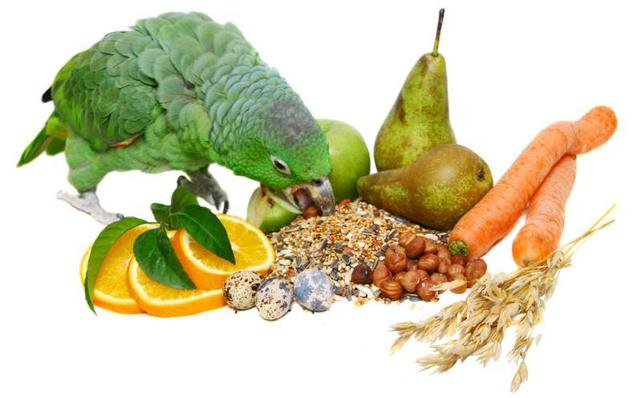 Корма, лакомства, витамины