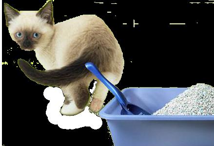 Кошачие наполнители